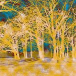Trees Reformed 04 Digital Print